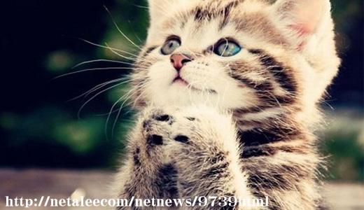 cat1-01